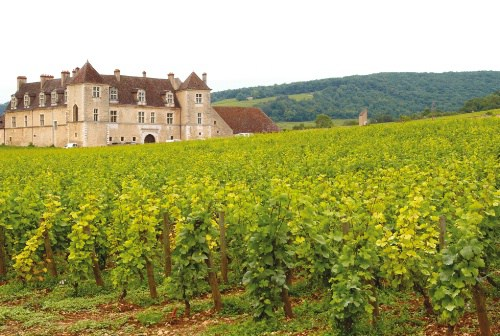 burgundy-wine-guide