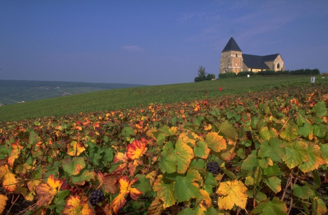 vineyard-in-champagne-2